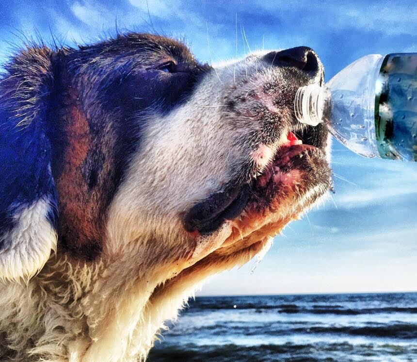 Common Dog Myths: Chapter One