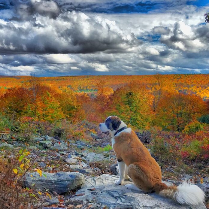 Autumn Health Tips for Dogs